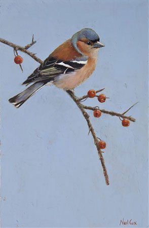 Original oil painting from Neil Cox, at Norton Way Gallery. This painting portrays a bueatiful Chafffinch, perched on a sprig of winter berries. h